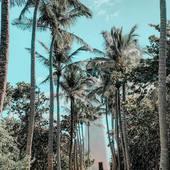 Je declare la saison des bikinis ouverte!! Si heureuse d'être en été 🌴❤️🔥  _________  #bandalia #vacances #inspiration #love #instamood #bestoftheday #voyage #sunset #paradis #vacation #travel #instadaily #accessoires #summervibes #mood #plage